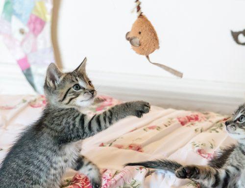 Quali giochi comprare al nostro gatto