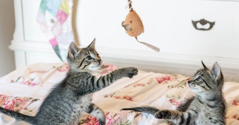 Quali giochi comprare al nostro gatto, Quali giochi comprare al nostro gatto