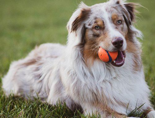 Quali giochi comprare al nostro cane