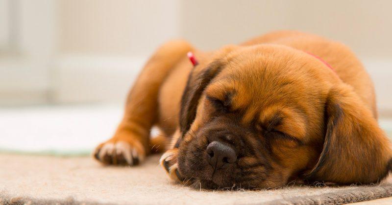 Perché i cuccioli dormono tanto, Perché i cuccioli dormono tanto