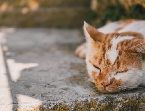 Consigli utili se si trova un animale randagio