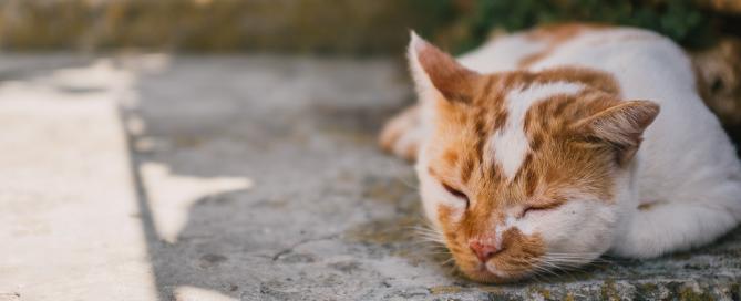 cibo per cani, cibo per gatti, Blog