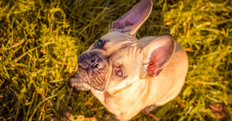 Come portare il cane in vacanza, Come portare il cane in vacanza