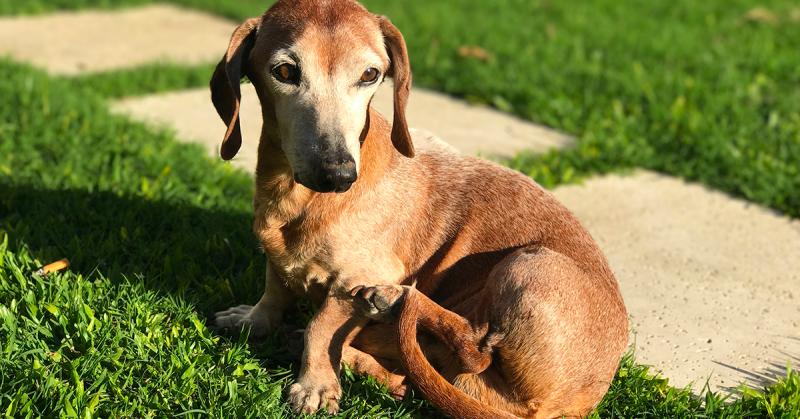 Come allestire il giardino per il nostro cane