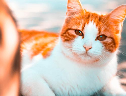 Quali sono gli insetti che infastidiscono il gatto