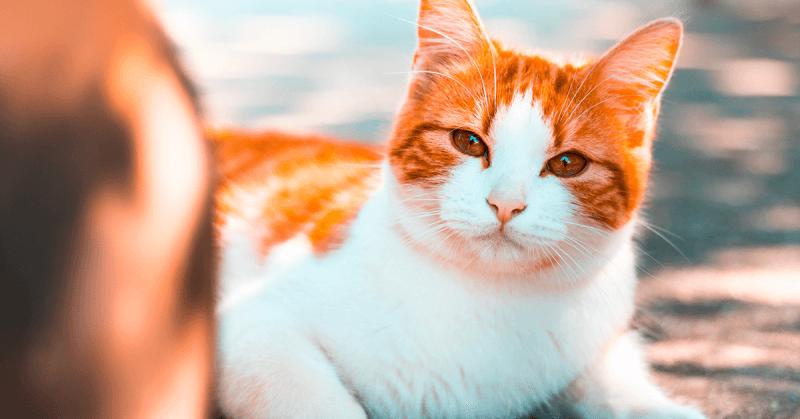Quali sono gli insetti che infastidiscono il gatto, Quali sono gli insetti che infastidiscono il gatto
