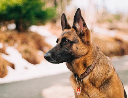 Quali odori infastidiscono il cane
