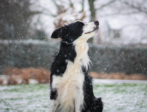 Come proteggere il cane dal freddo