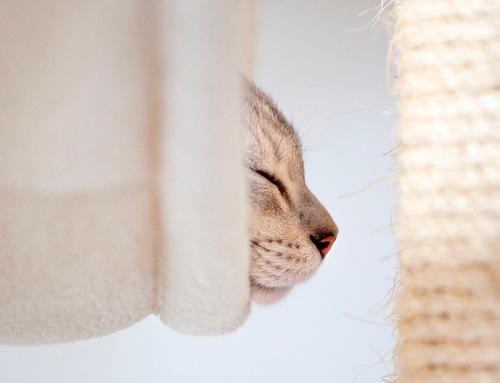 Quali sono i profumi che piacciono al gatto